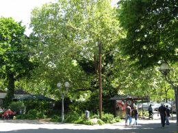 Trees at Freiheitsplatz