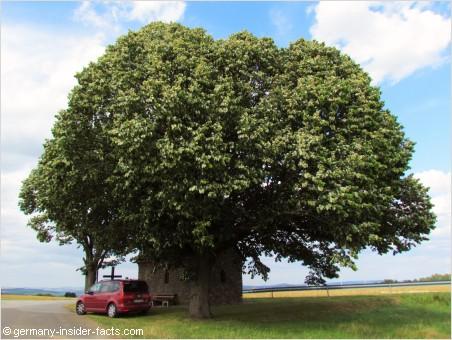 beautiful tree near a chapel