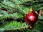 red ball and fir twigs